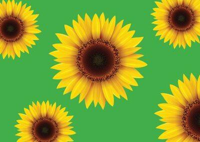 Wellington Airport Launches Sunflower Lanyard